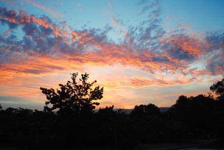 Zilpah tart Sunset